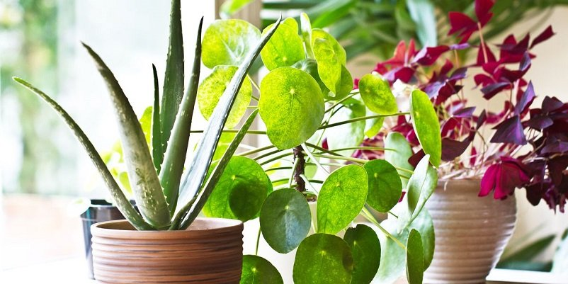 Reuse these items and make cheap pots for your plants