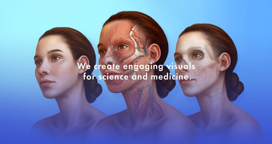 Collaborate with the Best Biomedical Illustrators