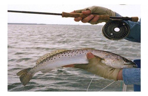 Ultimate Guide To The Fly Fishing Must-Haves